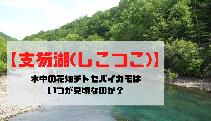 【支笏湖(しこつこ)】水中の花畑チトセバイカモはいつが見頃?